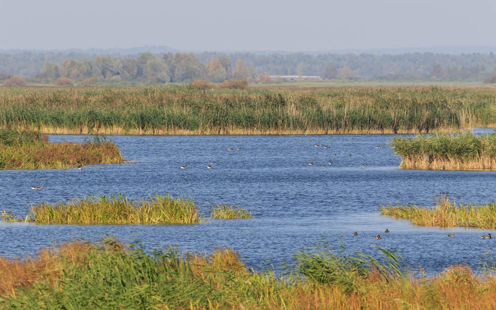 Nationalpark-Warthemündung (© A.Savin-Wikimedia-Commons)