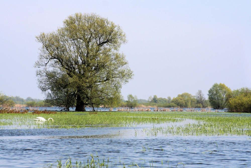 Nationalpark-Warthemündung (© Andrzej Gondek)