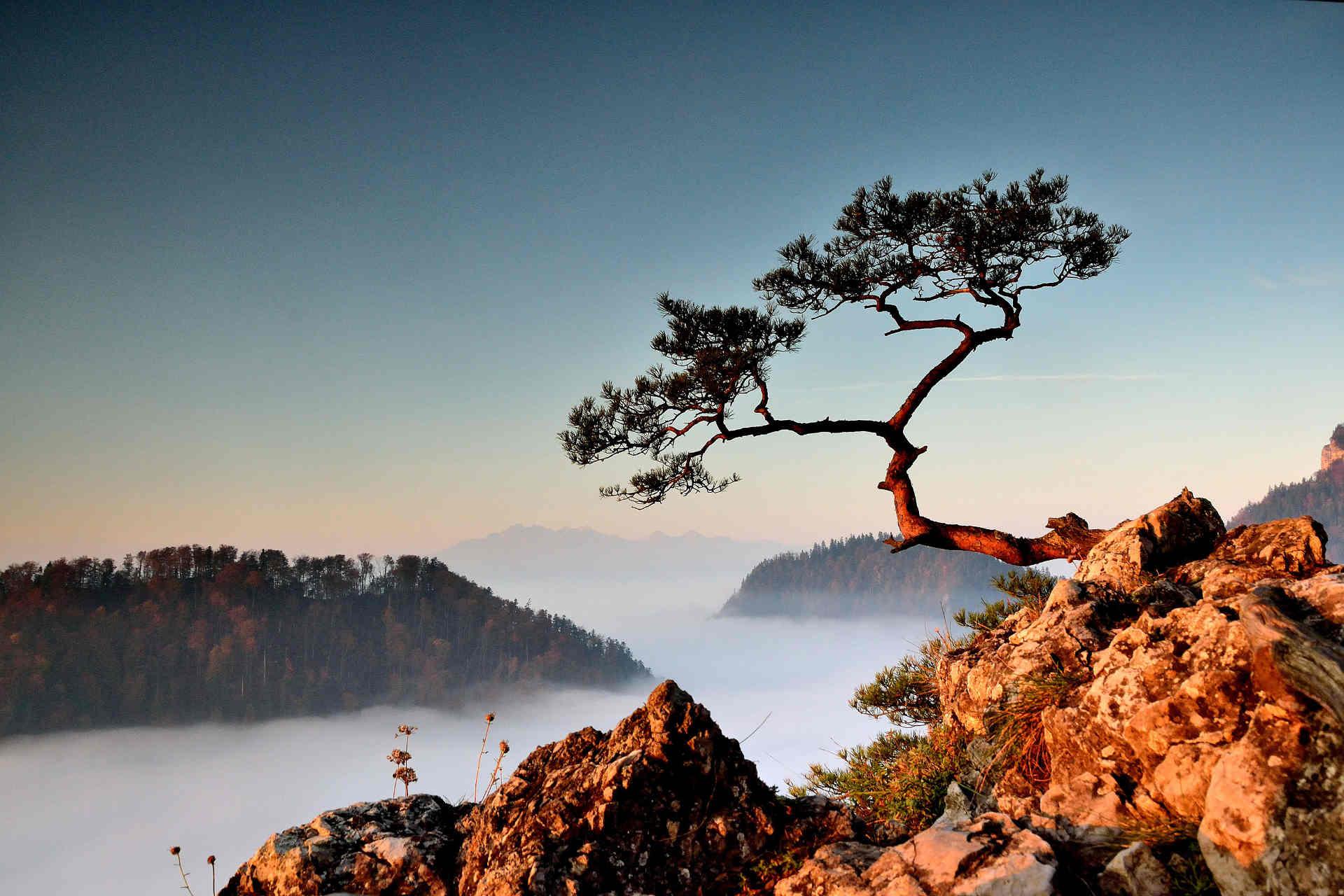 Aufsteigender Nebel am Dunajec-Durchbruch. Bild: TomagenO