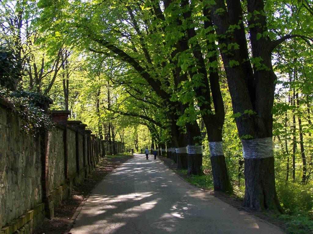 Zu sehen ist eine Kastanienallee in Tarnowitz, Bild: Lestat Jan Mehlich