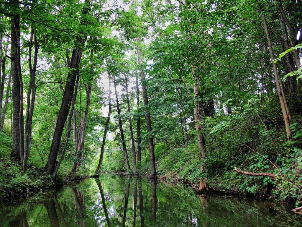 Zu sehen ist das Flüsschen Sapina bei Kruglanken, Bild: Semu