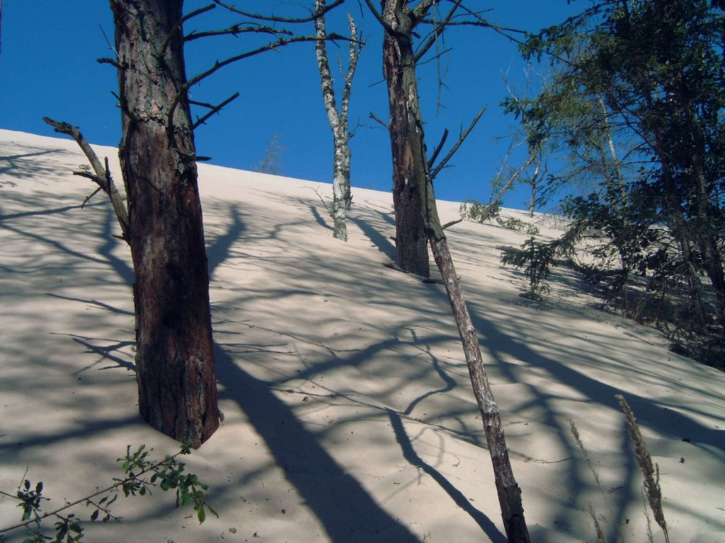 Zu sehen sind Bäume in Wanderdünen in Leba, Bild: Cornelius Schumacher Łeba